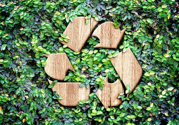 recycle green leaves